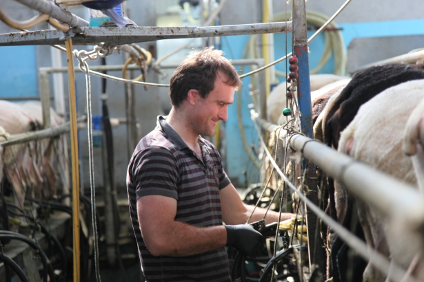 sheep milking (photo R Grubb)
